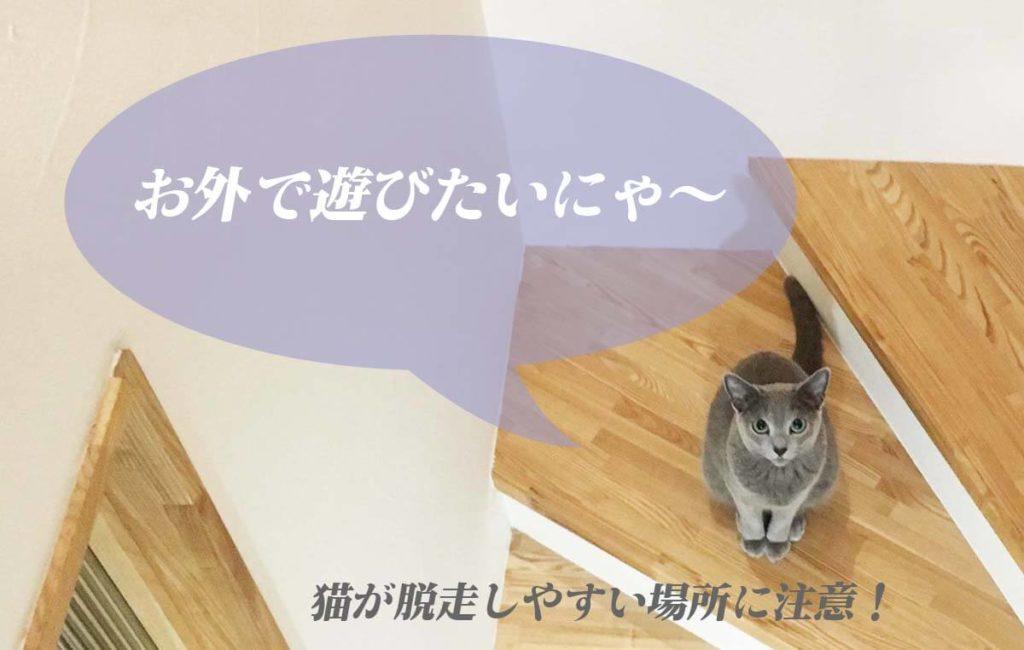 猫が脱走しやすい場所