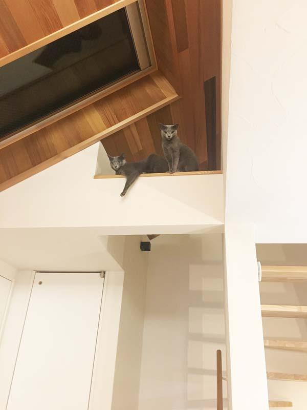 梁から窓の外を見る猫