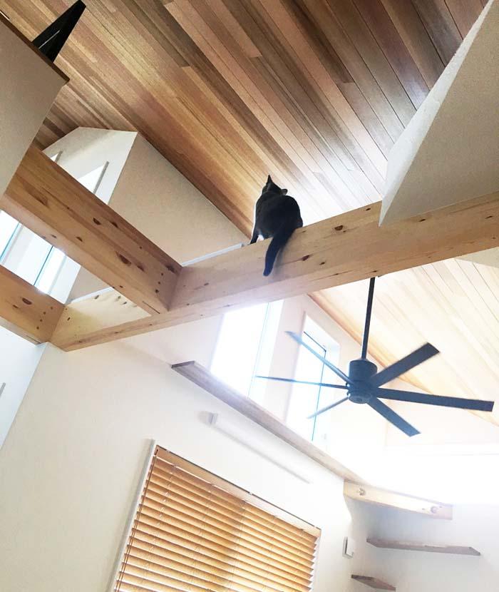梁の上の猫
