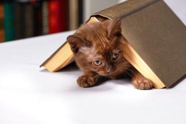 猫と暮らすなら読んでおきたい本【おすすめの3冊】