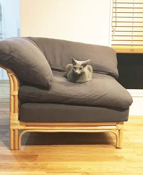 ラタンのユニットソファと猫
